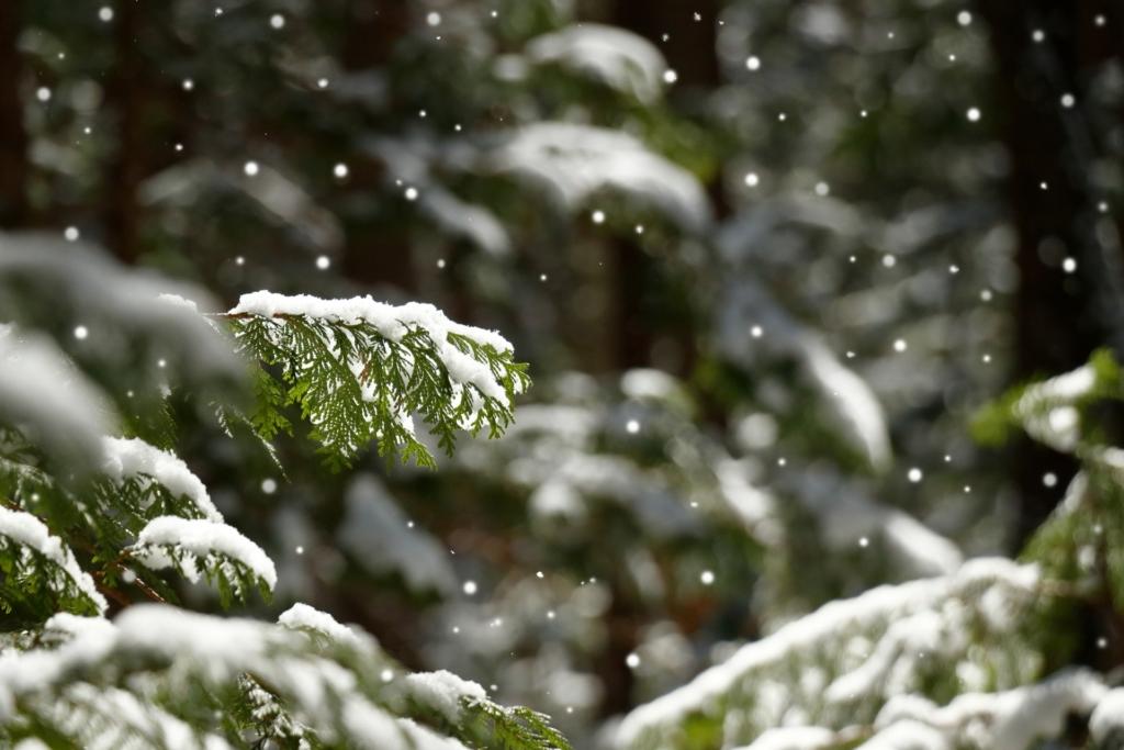【インコの水浴び】寒い冬でも大丈夫?