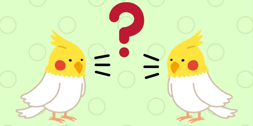 しゃべるインコが人の言葉をしゃべるのはなんで?練習方法や覚えやすい言葉とは?