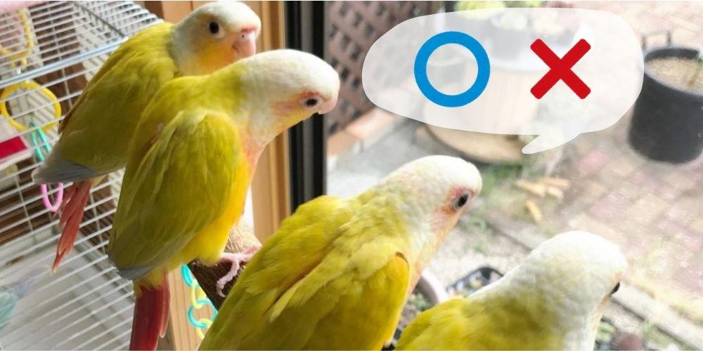 インコのペットホテルが見つからない!BIRDSITTERSってなに?