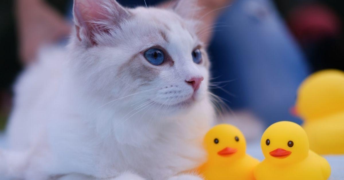 インコと猫は一緒に飼える?安心して飼うための4つのポイント