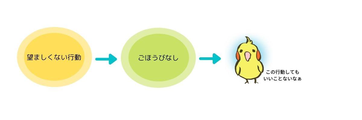 【インコのしつけ】ほめてしつける!インコに効果的なごほうびトレーニング