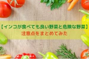 【インコが食べても良い野菜と危険な野菜】注意点をまとめてみた
