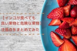 【インコが食べても良い果物と危険な果物】注意点をまとめてみた