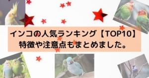 【TOP10】インコの人気ランキング、特徴や注意点もまとめました。